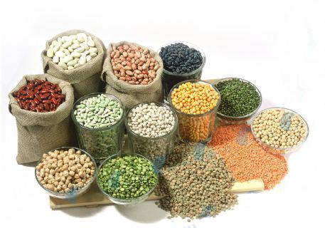 饲料中使用高粱、大麦时应注意的加工工艺问题