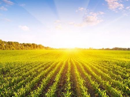 種植業的發展前景,農村種植業項目好嗎
