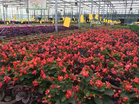 花卉温室大棚建设商:花卉温室大棚建设过程中的四点误区