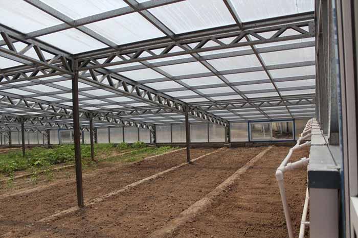 阳光板连栋智能温室