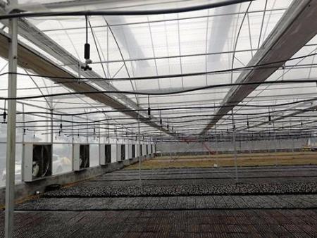 双拱双膜连栋温室大棚建设