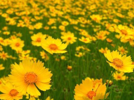 地被宿根花卉应如何施肥