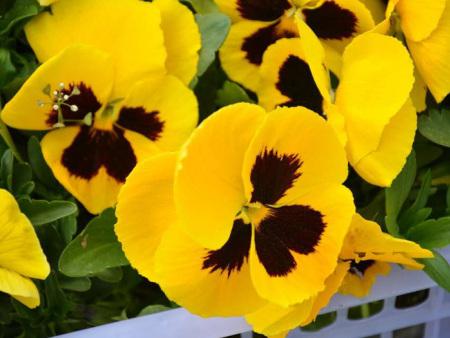 選擇宿根花卉需要注意些什么?