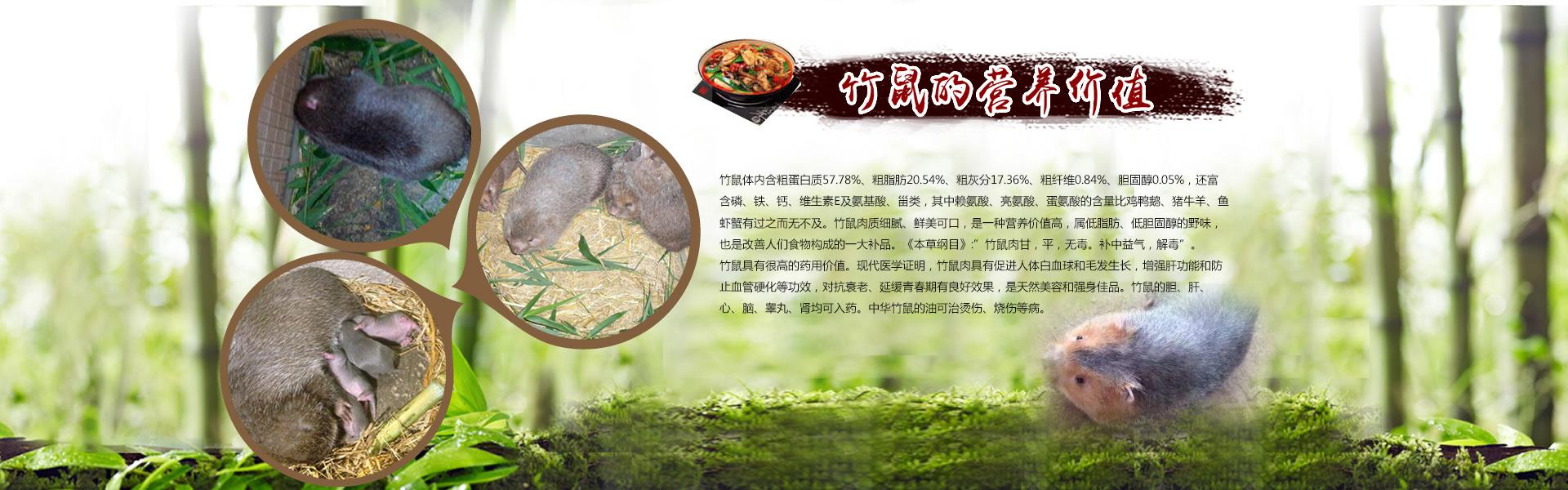 广西竹鼠营养价值