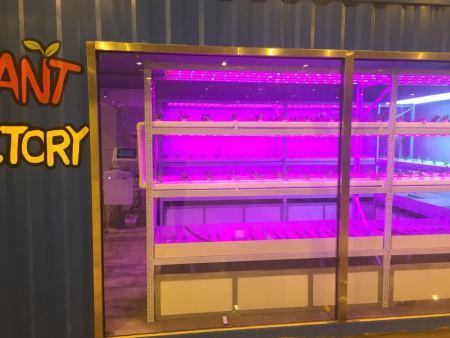 公司研发集装箱蔬菜种植