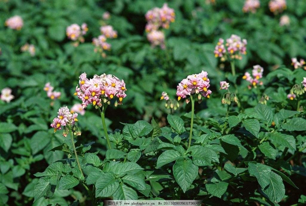 种子生物有机贝博足彩app—技术与现场实例