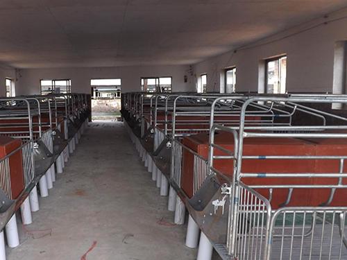 解读猪场保育床的结构、优势、特点