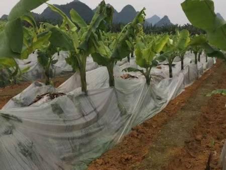 香蕉防寒膜,广西易胜博体育生产厂家