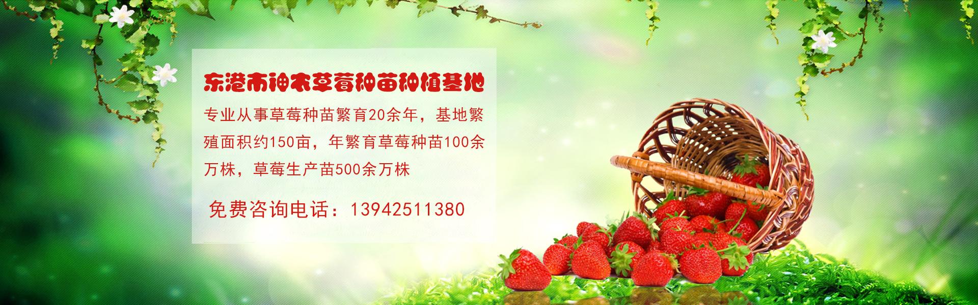东港市神农草莓种苗种植基地