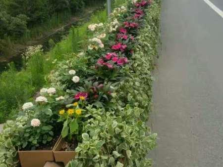 长效景观植物墙