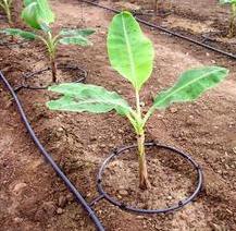 智能灌溉施肥