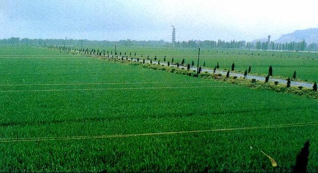 水稻种植监控系统