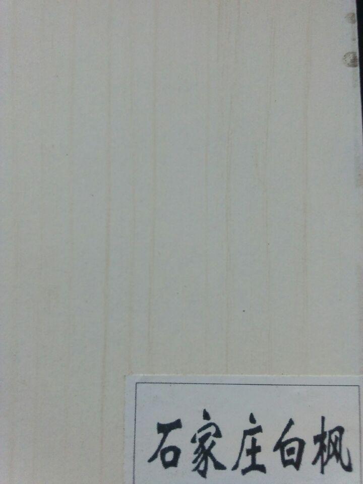 石家庄白枫.jpg