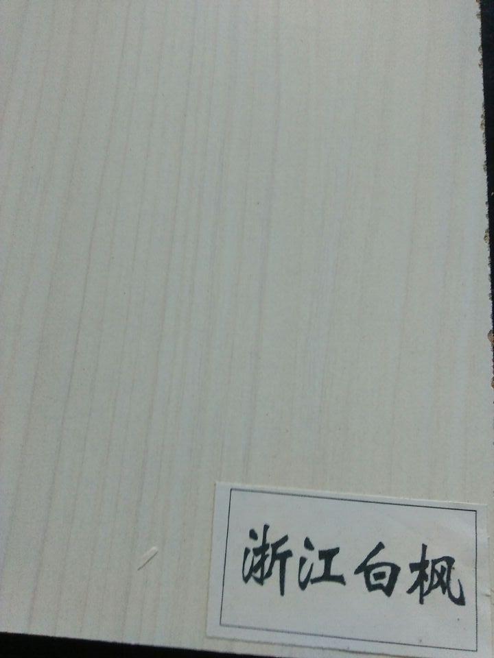浙江白枫.jpg