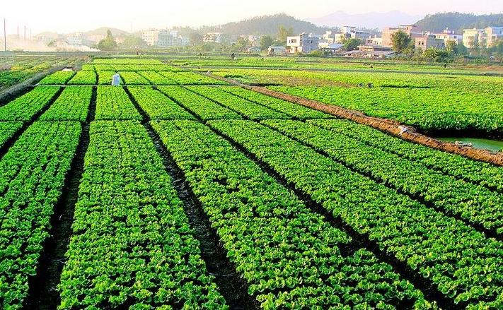 成都市发展现代农业的优势