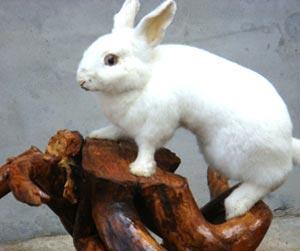 野兔.jpg