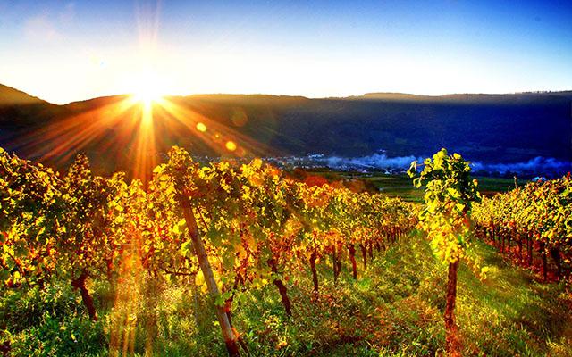 6794800-free-vineyard-wallpaper-插图3.jpg