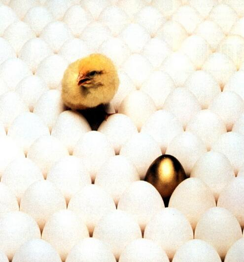 孵化場溫濕度監控系統