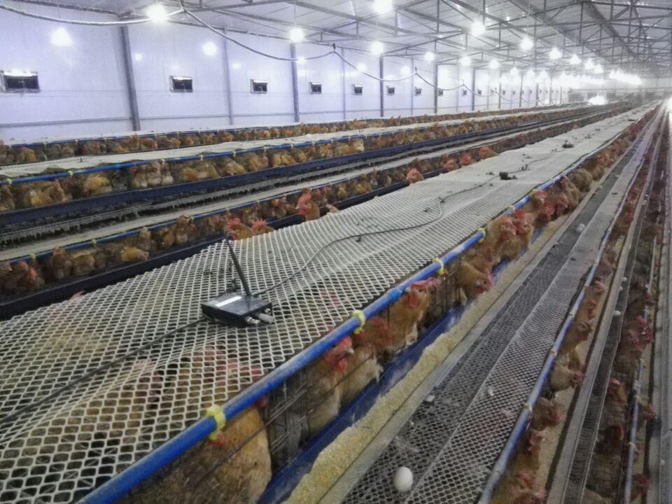 鸡舍温湿度监控系统