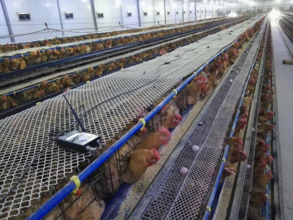 畜牧养殖温湿度监控系统