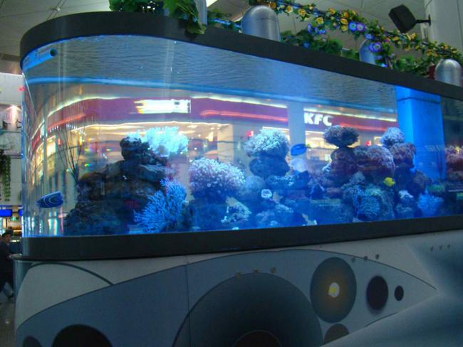 大型观赏鱼缸.png