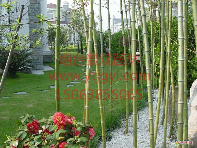 烟台苗木生产