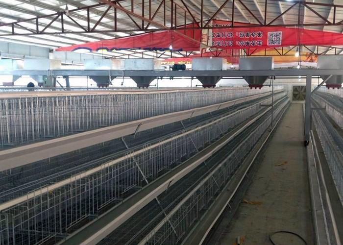 养殖工程案例_蛋鸡养殖设备_自动清粪设备_肉鸡自动送料线_养鸡场设备_鸡粪处理设备_发酵技术_设备-肇庆市粤广自动化养殖设备有限公司
