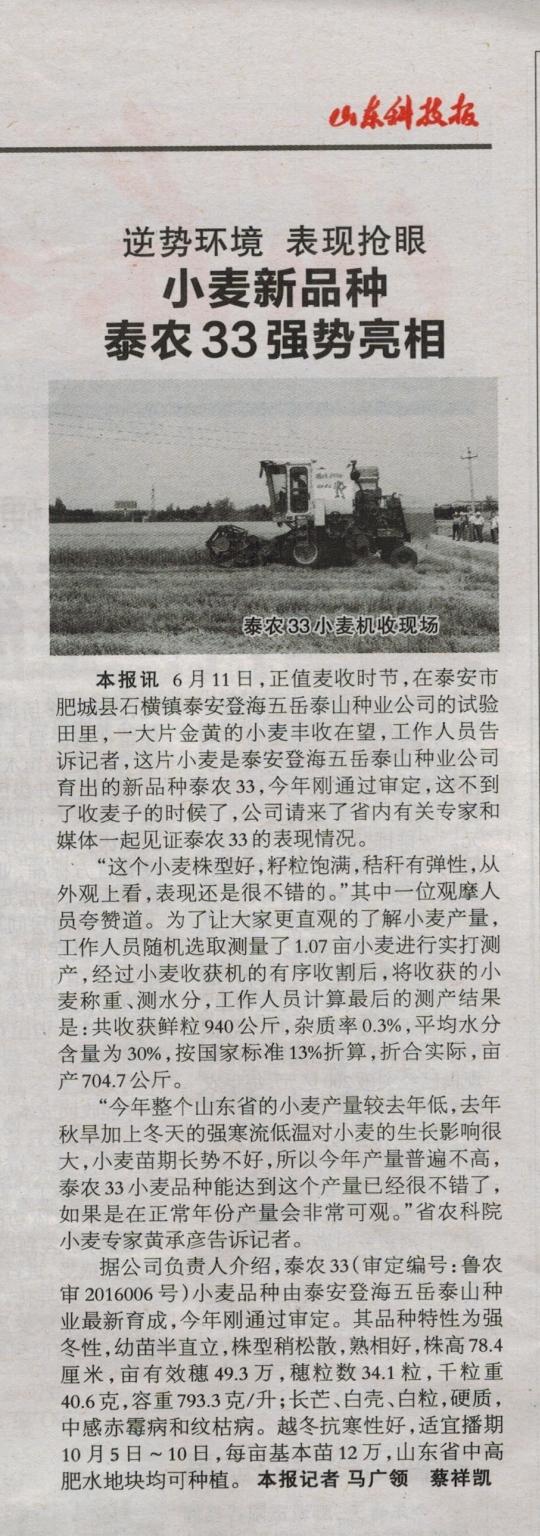 山东科技报泰农33 2_看图王.jpg