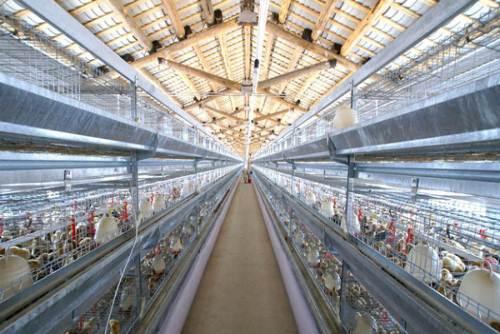 雞舍溫濕度監控系統