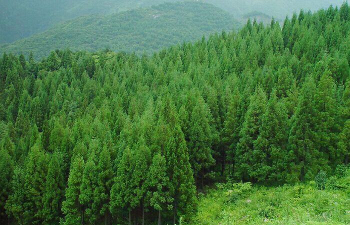 高山造林.jpg
