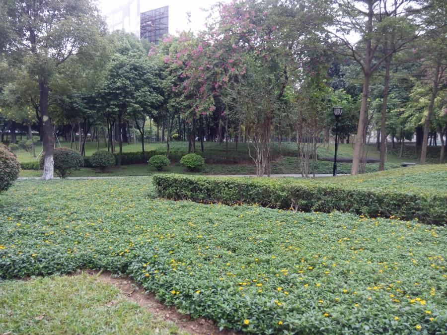 肇慶城區公共綠地養護項目-2.jpg