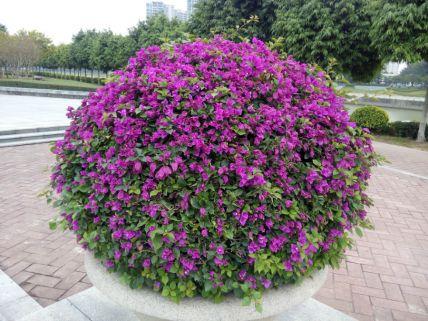 肇慶城區公共綠地養護項目-3.jpg