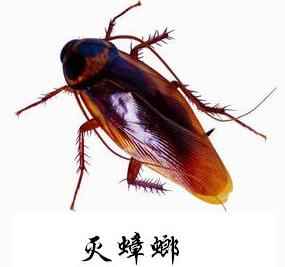 滅蟑螂.png