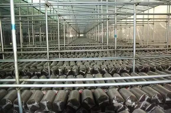 平菇厂房设计图