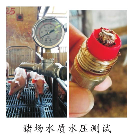 猪场水质水压测试.png