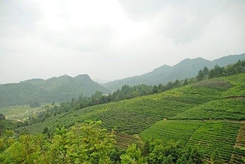 土壤質地對作物的影響
