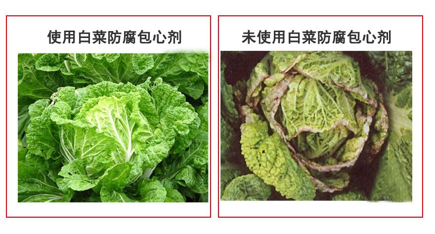 白菜防腐對比.jpg