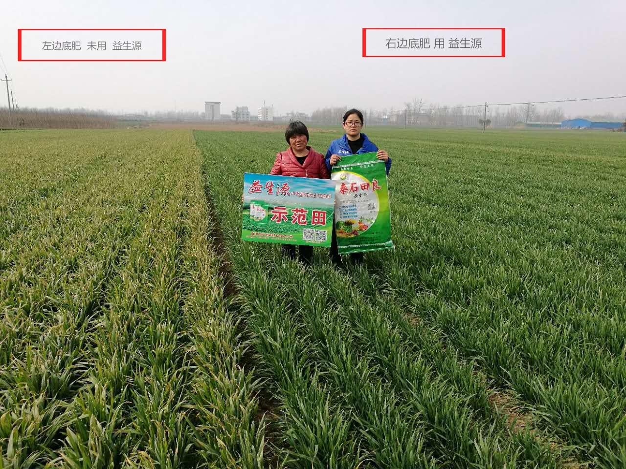 小麦2.jpg