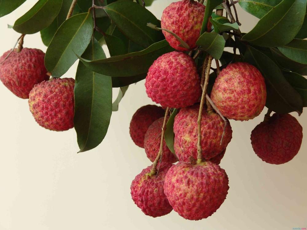 果树1.jpg