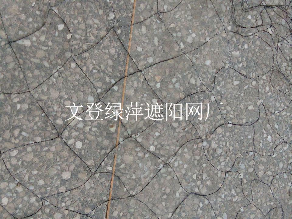 西洋参压草网5.jpg