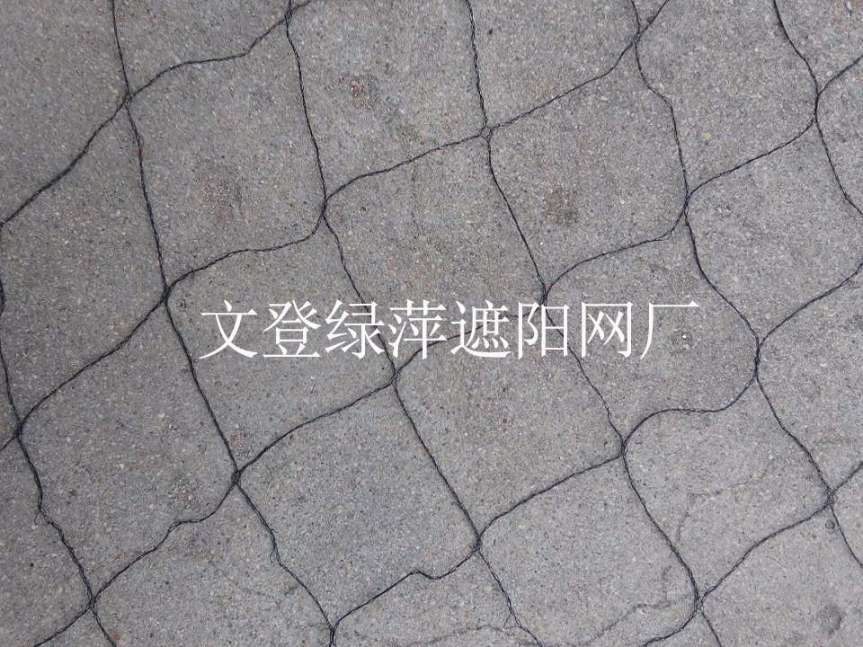 西洋参压草网7.jpg