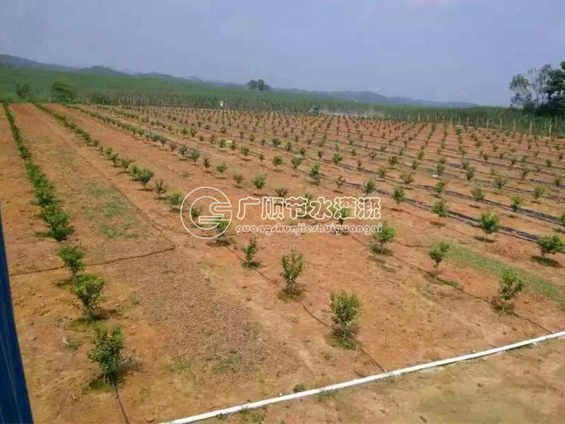 崇左平地沃柑水肥一体化灌溉.jpg