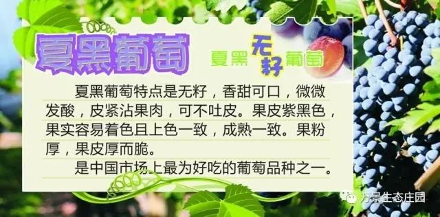 太阳城官方娱乐2007