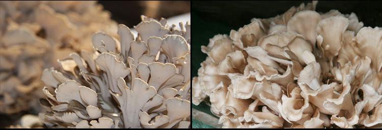 山雞栗蘑醬_08.jpg