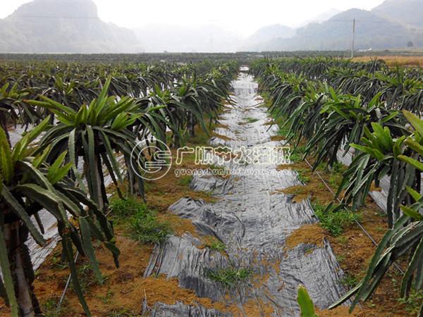 滴灌节水灌溉标准果园.jpg