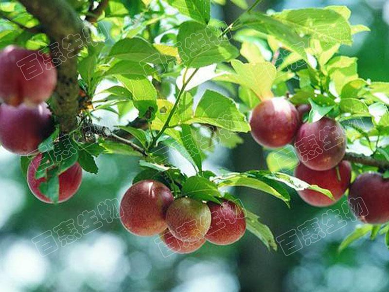 果园2.jpg