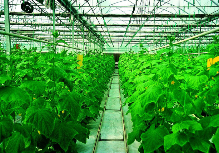 中国农业发展