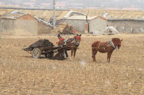 农肥8.jpg