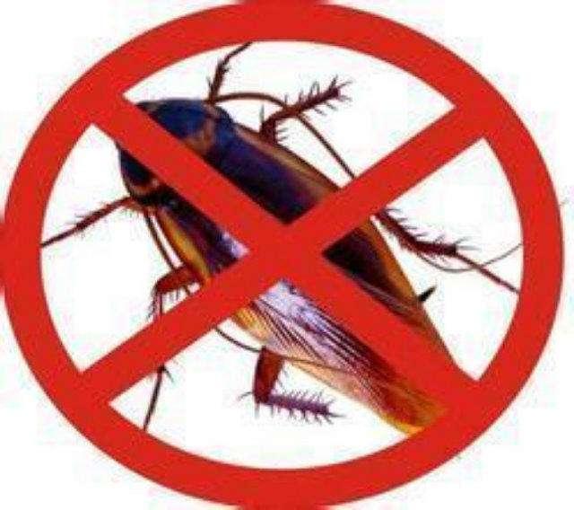 物理灭蟑|物理灭四害-西宁紫光环境治理有限公司