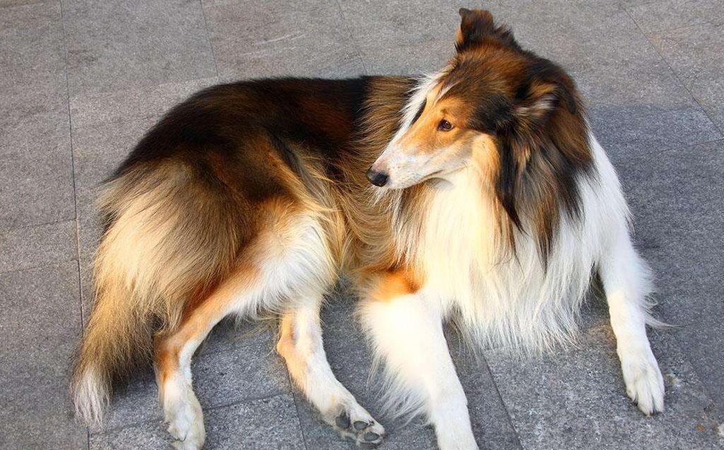 宠物狗生病的会有什么症状
